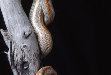 snakes & snake homes