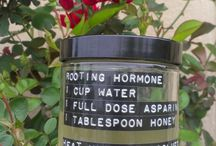 ROOTING HORMONE NATURAL