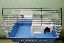 Mapache Argentina Venta Online