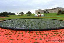 Sky City and Giant Poppy Art Auckland Domain