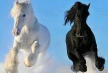 favourite animals / Άλογα και δελφίνια - τα αγαπημένα μου ζώα!!!
