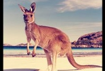 Australian Wildlife / by Down Under Endeavours