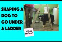 Training Dog Tricks / Instructional videos showing how a dog is trained to do circus tricks.