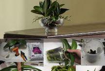 de orquideas
