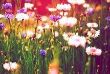 Flora / Flowers, plants, etc