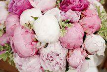 pioenrozen , stokrozen, peonies en andere mooie rozen / pioenrozen, stokrozen, PEONIES, en andere mooie rozen
