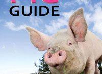 Schweine / Alles Rund ums Schwein