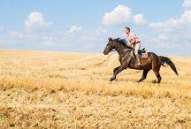 Horse / horse, horse riding, equitation