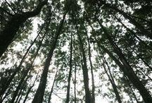 boast tree