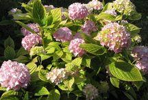 Pestovanie kvety