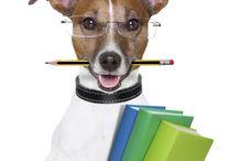 Teach About Pets