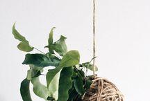 Horto - Plantas