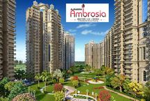 Ajnara Ambrosia / Ajnara Group is one of the reputed real estate developer recently presented Ajnara Ambrosia. The project is exactly located in Sector 118 Noida which connect major city of NCR. The project comes with 2 BHK and 3 BHK apartments in various sizes along with all modern required amenities.
