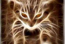 A energia dos Felinos em nossas vidas / Entendam como funciona A Energia dos Felinos em Nossas Vidas! Depois desse post, você vai querer ter um felino para amar e cuidar!!! http://www.camilazivit.com.br/a-energia-dos-felinos-em-nossas-vidas/