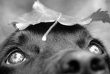 BW - Photography: dogs