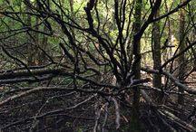 NATµRE / NATURE NATURE PHOTOGRAPHY TREES FOREST PLANTS WILD ANIMALS MAN VS WILD WILD WORLD