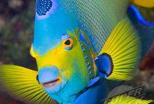 Tropical Fish / Tropical Fish