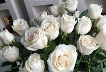 "white Roses / White roses are given to those who are innocent, reverent, and pure. They are very commonly used in weddings. They can also be given as a sign of secrecy. A white rosebud is used to show girhood.  A white rose that has been dried means ""Death is Preferable to Loss of Virtue"". A whithered white rose represents fleeting beauty, or given to show that no impression was made."