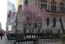 spring time / spring time