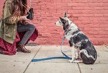 Smok Fafelski! / Wszystko co chcielibyście wiedzieć o psach, ale baliście się zapytać.