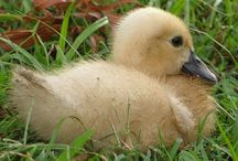"""So Sweet!!! / Snowflake the Duck & """" Mama"""" Kylie"""