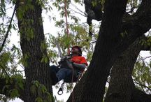 Chatham New Jersey Tree Services Companies