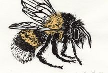Insecten / Allerlei