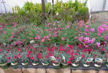 Plant Partner Plants at Lowes