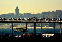 النوارس أصدقاء الأنسان في اسطنبول .. الصورة من شاطء أمينونو / سجل معنا ونتصل بك: http://www.beylikrealestate.co/ar/contact أو تواصل معنا مباشرة على الأرقام التالية: واتس آب - فايبر - لاين/ Whatsapp & Viber- Line 00905495050644- 00905495050623 00905495050641- 00905495050628 ------------------------------ Office : 00902122194890 - Saudi:00966505324561 Register : http://www.beylikrealestate.co/ar/contact Website : www.beylikrealestate.co Address : Harbiye, şişli /Istanbul/ Turkey