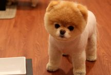 Cute Dogs / I love dogs
