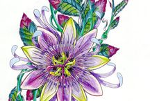 passiflora tegning/male