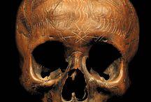 Trophy/Ritual/Ancestor skulls