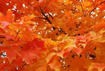 Autumn / by Chris Steed