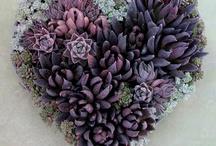 Succulents & Echeveria / beautiful succulents, compliment all designs  #succulentsforweddingbouquets #echeveria