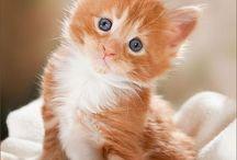 Kittys & cats