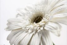 Colortherapy: white / by Irina's CuteBox