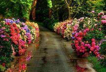 Caminhos,estradas e pontes / Os que sonham, insistem... Encontram caminhos, renascem! (Ana DAraújo)