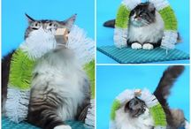 DIY CAT STUFF