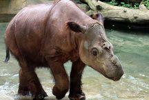 Rhinos In Zoos