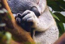 Спящие малыши / Милые няшные спящие маленькие животные