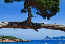 Amazing trees / by Betsy Cano