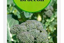 Gardening- Broccoli