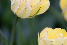 Home - Garden Flowers