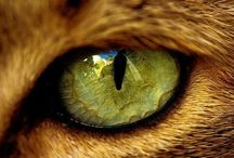 I love felines!