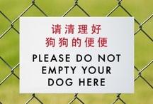 Chinglish / by Beth Hill