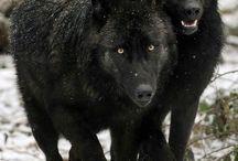 loups et +