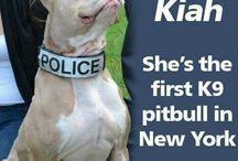 Love pitbulls/am staff