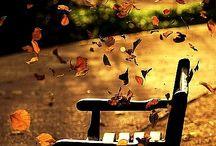 Autumn mix colours