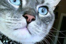 Little Kitties