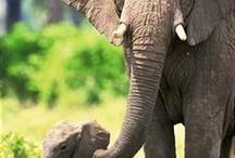 Elephants Galore / by Sharon Easton